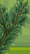 xmas tree leaf